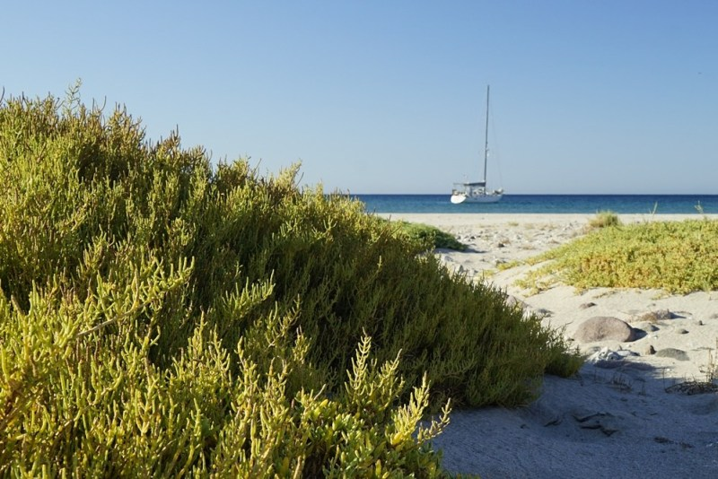 Scrubby green growth on a sand dune in the foreground; a sailboat floats in the near distance.